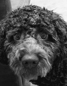 Vito der Hund